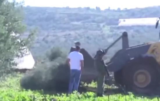 فلسطینیها اجازه کاشت درخت زیتون را ندارند