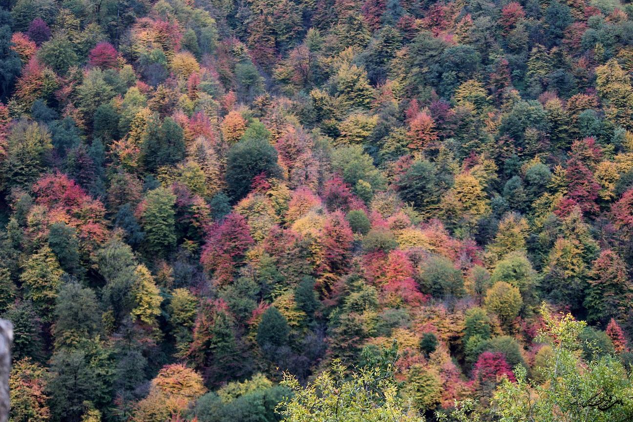 طبیعت پاییزی «ییلاقات ماسال» تابلویی رنگارنگ از زیباییهاhttps://masaltourism.com