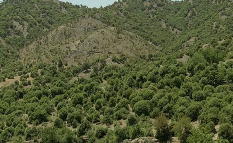 هول حریق در جنگلهای زاگرس/ نبود امکانات مناسب تیشهای بر ریشه جنگلهای لرستان