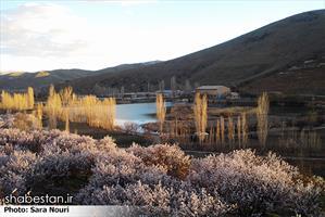 شکوفه های بهاری سنندج