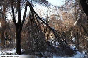 شکسته شدن شاخه درختان