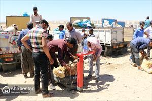 بازار خرید و فروش گوسفند در کرمان