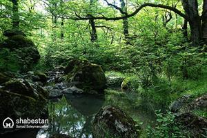 طبیعت زیبای مسیر آبشار لاتون