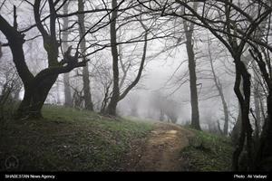 جنگل کوته کومه