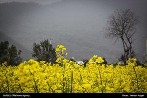 شکوفه های بهاری گلستان