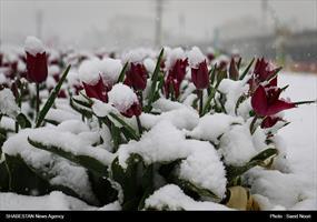 کلیپ/ بهار زمستانه ارومیه