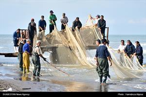 صید پره در دریای خزر