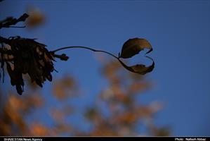 آخرین روزهای پاییزی در اراک